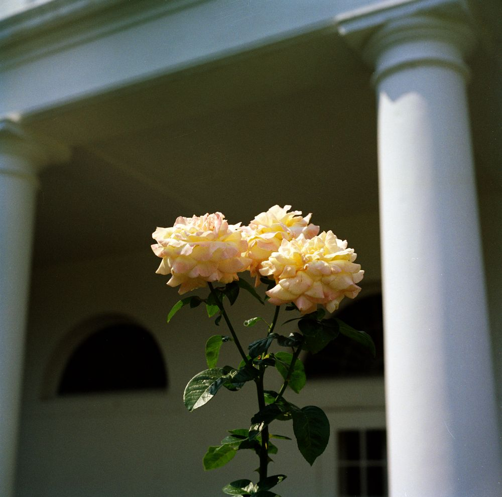 KN-C18628. Flowers in the Rose Garden of the White House - John F ...