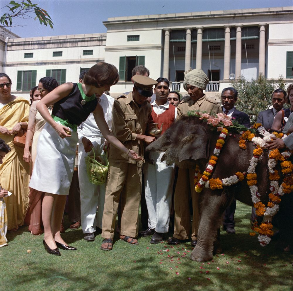 ST-C117-25-62. First Lady Jacqueline Kennedy Feeds Elephant in India ...