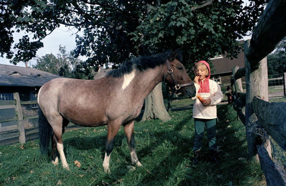 KN-C29982. Caroline Kennedy Feeds Pony, Macaroni, at Hammersmith Farm ...