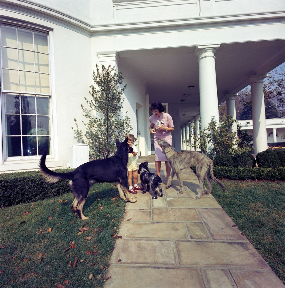St C363 2 63 John F Kennedy Jr With Family Dogs